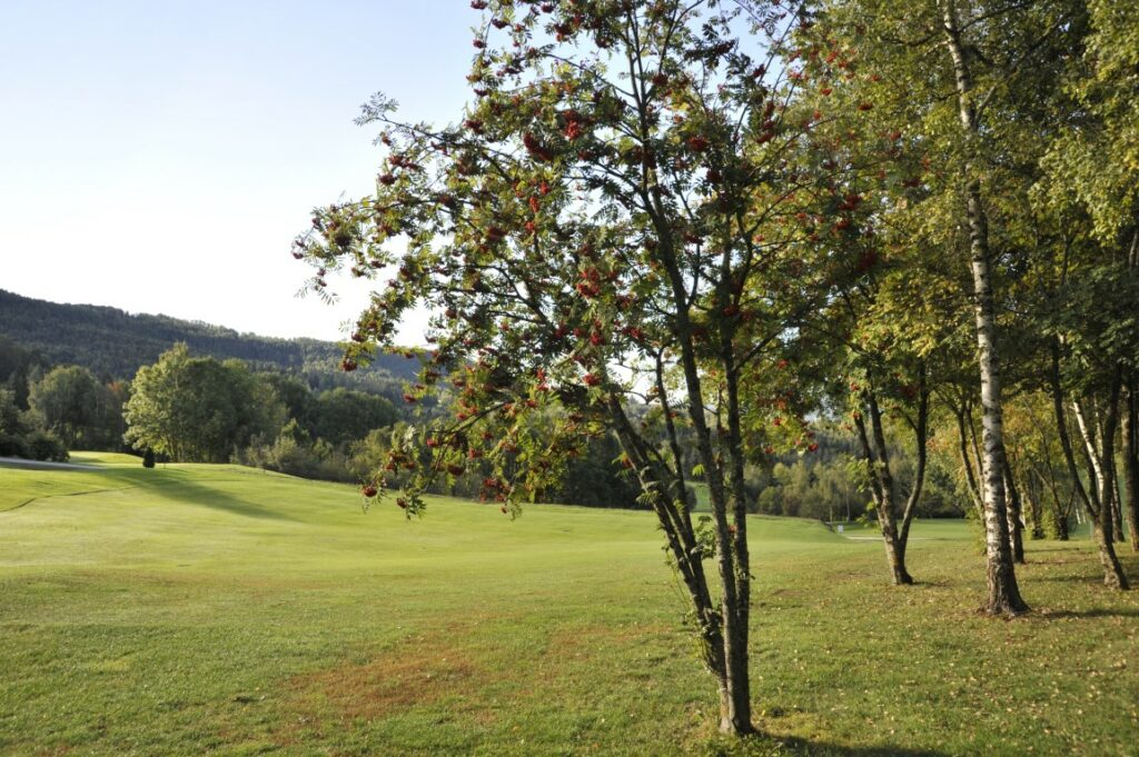 Golfclub Petersberg Fairway 7 Mittel