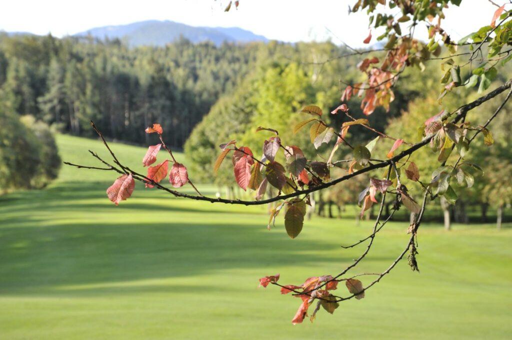 Golfclub Petersberg Hole 9 2 Mittel