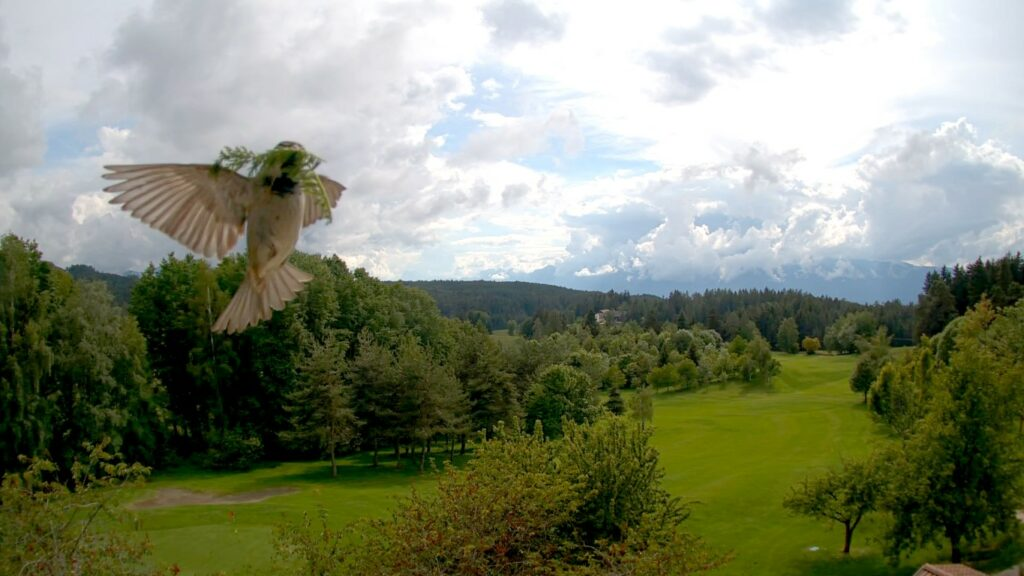 Golfclub Petersberg Webcam May 2020 Mittel
